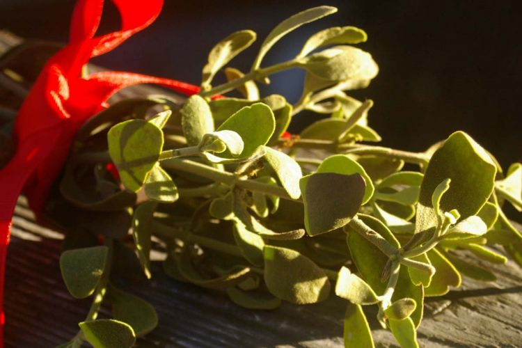 Jmelí - magická rostlina, která přináší štěstí. A nebo naopak, pokud ji přestříkáte zlatým sprejem.